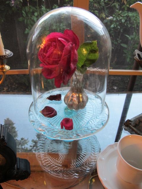 Glass cloche over a real red rose from my garden that happened to drop petals during the party