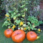 Painted papier-mache pumpkins with real pumpkin vines