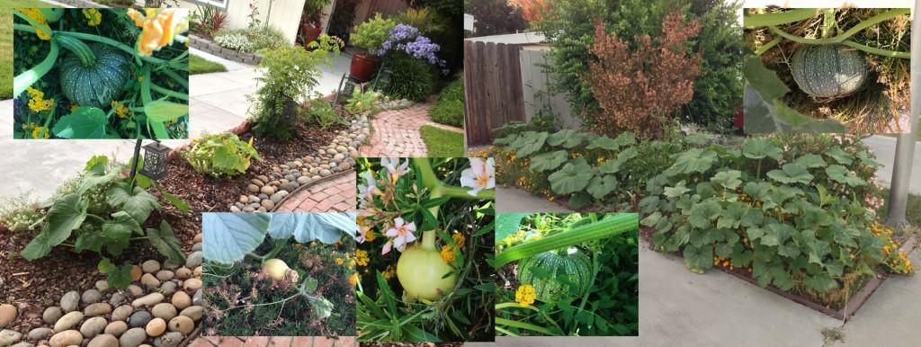 Pumpkins 071113