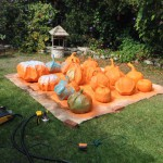 Painting Pumpkins in Progress