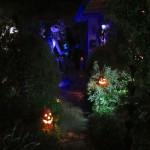 Jack & Zero on the front porch