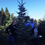 Fresh Christmas tree from Apple Hill