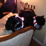 Onyx remembers this, but it's Siddy's first fireworks party!
