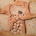 Cutting Star Croutons from homemade whole wheat sourdough bread