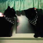 Ebony & Obsidian SHARING the windowsill!