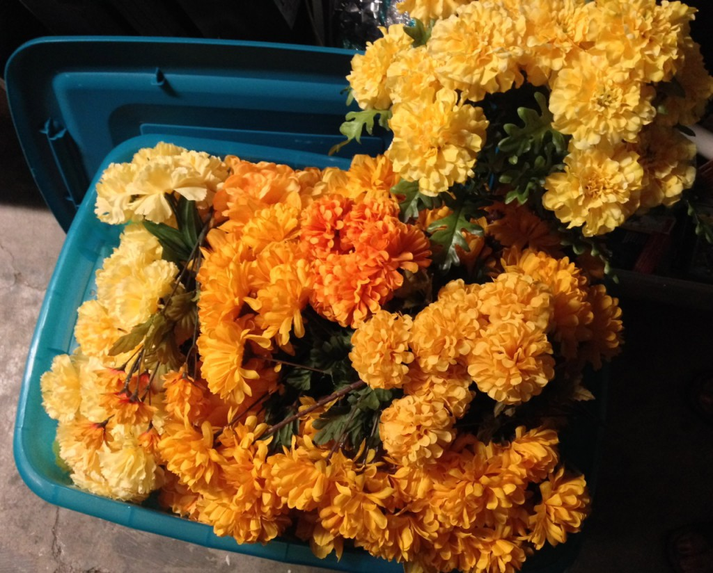 Golden flowers purchased all summer have overflowed their boxes...