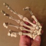 At least I finally ended up with poseable fingers, albeit fragile!