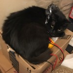 Ebony in her new collar keeping one of the electronics boxes warm