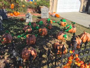 pumpkin vines in the graveyard